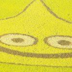 【迫力大画像】ドラゴンクエスト・田んぼアート in 埼玉行田 ギネスブック認定