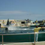 沖縄放浪 アメリカと米ドルとコザと海洋博公園